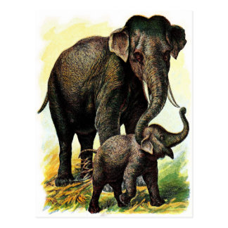 Vintage Drawing: Mother Elephant with Calf Postcard