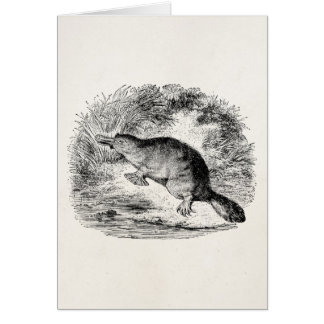 Vintage Duck Billed Platypus Personalized Animals Note Card