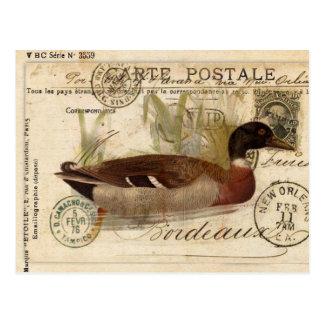 Vintage Duck Card Postcard