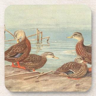 Vintage Ducks Birds Wildlife Animals Pond Coaster