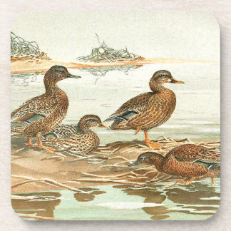 Vintage Ducks Birds Wildlife Animals Pond Coaster