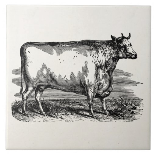 6 Etl Business Requirements Specification Template Reyri: Vintage Durham Cow Bull Personalised Illustration