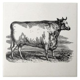 Vintage Durham Cow Bull Personalized Illustration Large Square Tile