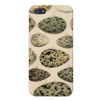 Vintage Egg Illustration - iPhone 4 iPhone 5 Covers