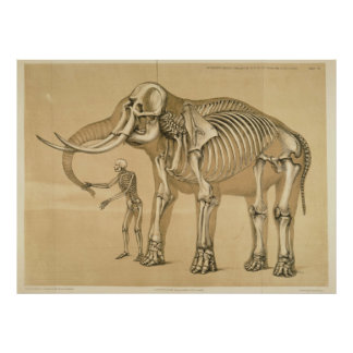 Vintage Elephant and Human Skeleton Illustration Poster