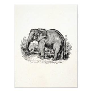 Vintage Elephant Personalized Elephants Animals Photograph