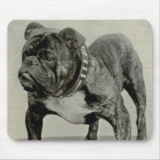 Vintage English Bulldog Photograph Mousepads