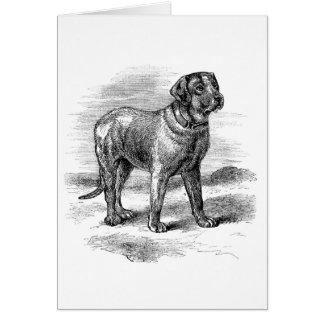 Vintage English Mastiff, Card