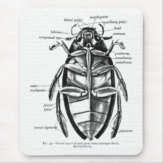 Vintage Entomology Hydrophilidae Scavenger Beetle Mouse Pad