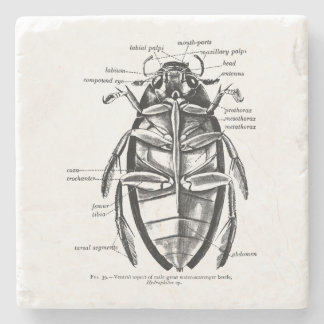 Vintage Entomology Hydrophilidae Scavenger Beetle Stone Beverage Coaster