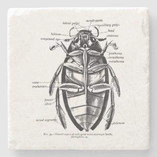 Vintage Entomology Hydrophilidae Scavenger Beetle Stone Coaster