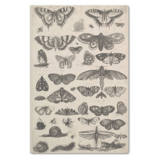Vintage Entomology Lepidoptera Insects Decoupage Tissue Paper