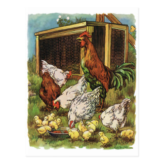 Vintage Farm Animals, Rooster, Hens, Chickens Postcard