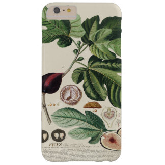 Vintage Figs Botanical Print iPhone 7 Cases