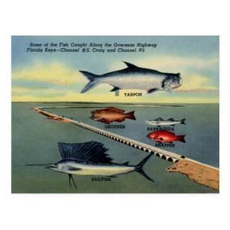 Vintage Fish of Florida Keys Postcard
