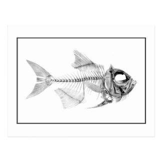 Vintage fish skeleton etching postcard