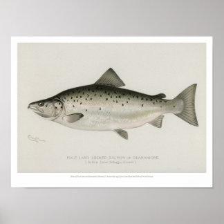 Vintage Fishes - Land Locked Salmon Poster