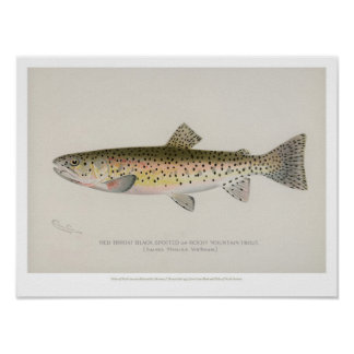 Vintage Fishes - Rocky Mountain Trout Poster