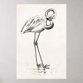 Vintage Flamingo Bird Antique Bird Template Poster
