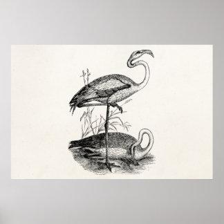 Vintage Flamingo Birds Tropical Flamingoes Bird Poster
