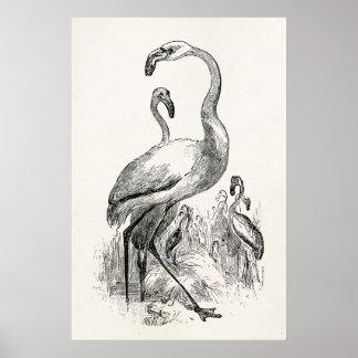Vintage Flamingo Tropical Bird Antique Template Poster