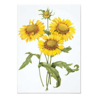 Vintage Floral Blanket Flower Sunflower by Redoute 13 Cm X 18 Cm Invitation Card