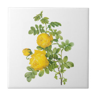 Vintage Floral Flowers, Yellow Roses by Redoute Tile