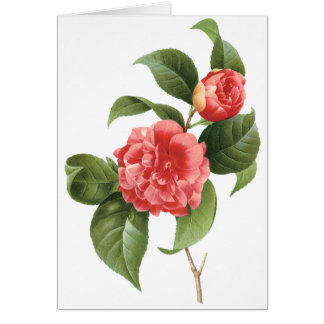 Vintage Floral, Pink Camellia Flowers by Redoute Card