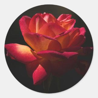 Vintage Floral Pink Red Rose Flower Black Round Sticker