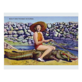 Vintage Florida Alligator Postcard