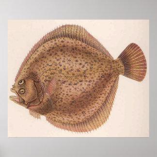 Vintage Flounder Fish Illustration (1919) Poster