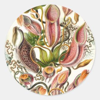 Vintage Flower Illustration Classic Round Sticker