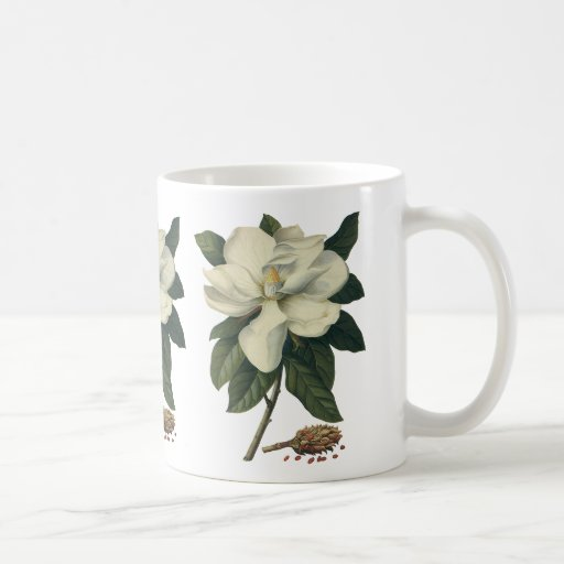 Vintage Flowers, Blooming White Magnolia Blossom Coffee Mugs