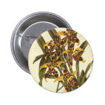 Vintage Flowers, Tropical Odontoglossum Orchid Pinback Buttons