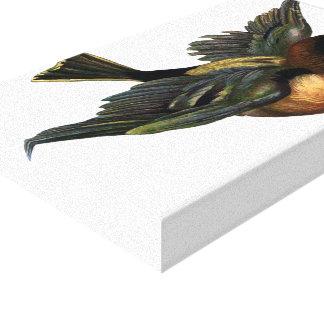 Vintage Flying Bird Illustration Canvas Print