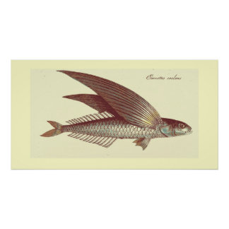 vintage flying fish print