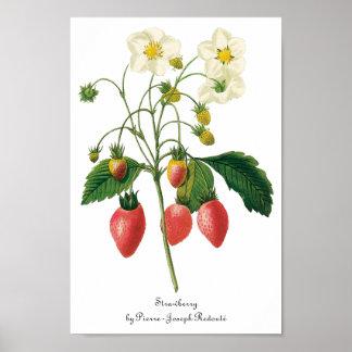 Vintage Food Fruit Berries Strawberries by Redoute Poster