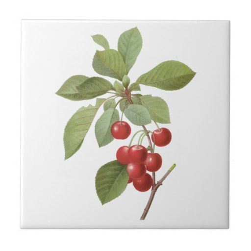 Vintage Food Fruit, Cherry Cherries by Redoute Tile