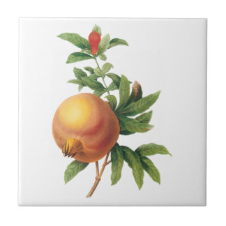 Vintage Food Fruit Pomegranate by Redoute Tile