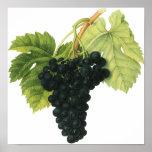 Vintage Food Fruit, Red Wine Organic Grape Cluster Print