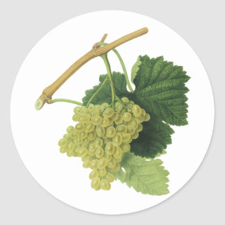 Vintage Food Fruit, White Wine Grapes on the Vine Round Stickers