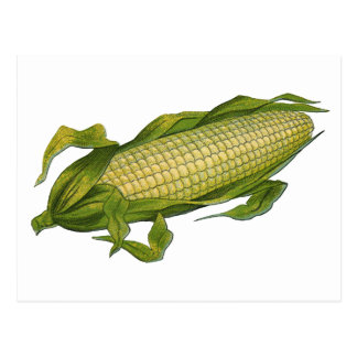 Vintage Food, Healthy Vegetables, Corn on the Cob Postcard