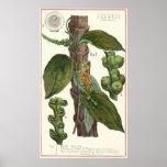 Vintage Food Herbs Spices, Black Pepper Plant Print
