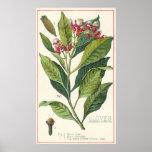 Vintage Food Herbs Spices, Botany of Cloves Print