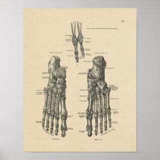 Vintage Foot Bones Anatomy 1880 Print