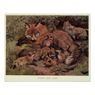 Vintage Fox and Cuba Painting (1909) Poster