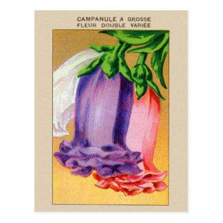 Vintage French Bellflower Flower Seed Package Post Card