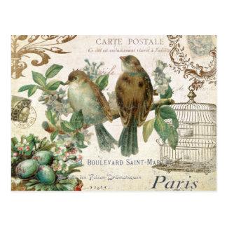 Vintage French Birds postcard