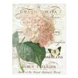 Vintage French Botanical hydrangea postcard