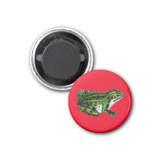 Vintage Frog Illustration Magnet